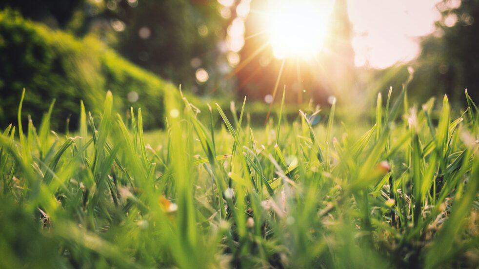 tracce di primavera